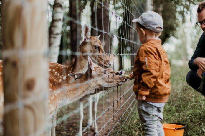 Besöka Furuvik djurpark | Bizbay